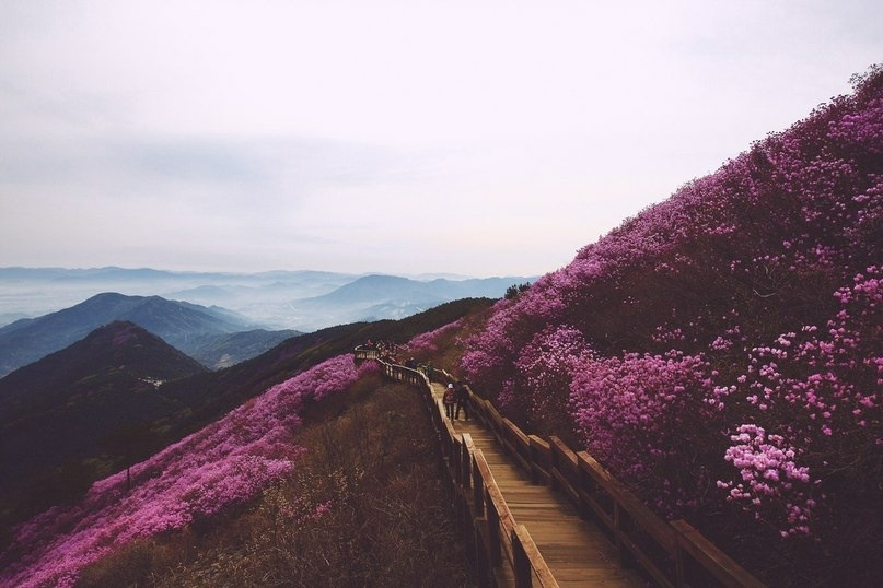 amazing view, beautiful, country, drawings, exercise, explore, flowers, fog, grunge, hiking, hill, indie, landscape, mist, mountains, nature, photography, picturesque, pink, soft grunge, top, trail, travel, vintage, wanderlust, world