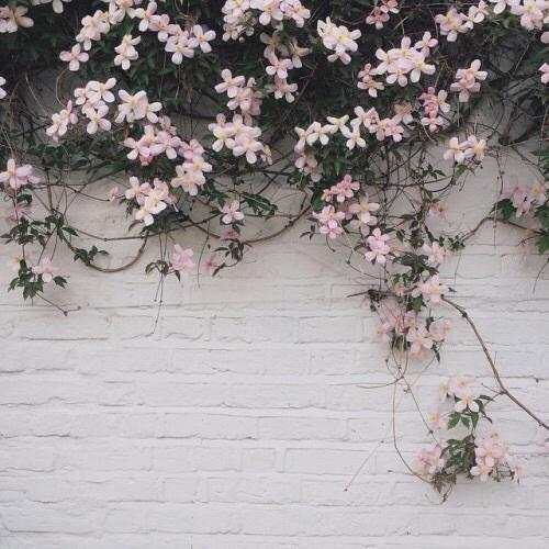 Aesthetic flowers grunge indie nature image 4067753 - Nature wallpaper aesthetic ...