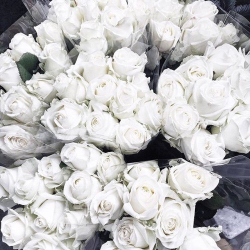 aesthetic, beautiful, cool, cute, flower, flowers, grunge, hipster, indie, life, live, love, rose, roses, sad, sadness, tumblr, vintage, white, white roses