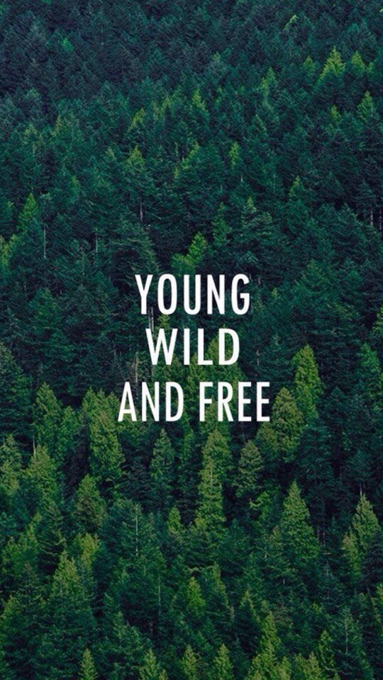 b.a.p, bap, forest, free, freedom, green, iphone, nature, traveling, wallpaper, wild, young, iphone 6, 6s