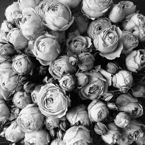 tumblr, black, grey, chic, roses