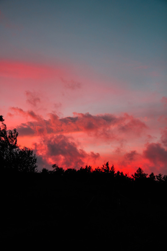 evening, pink, forest, trees, red