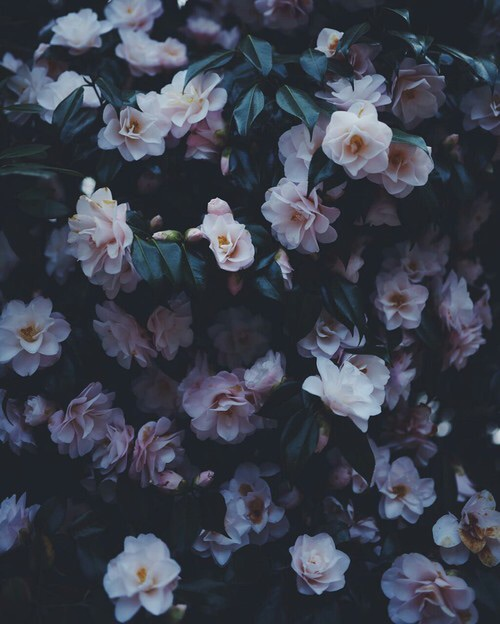 glow, grunge, tumblr, pale, weheartit - image #4192728 by kristy_d on ...