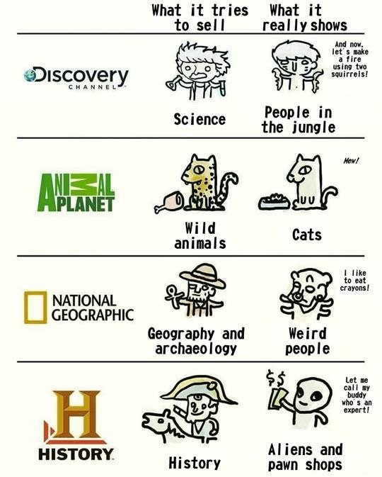 science, nature, cats, channel, animal