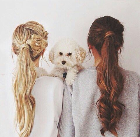 cheveux, chien, brune, blonde, long