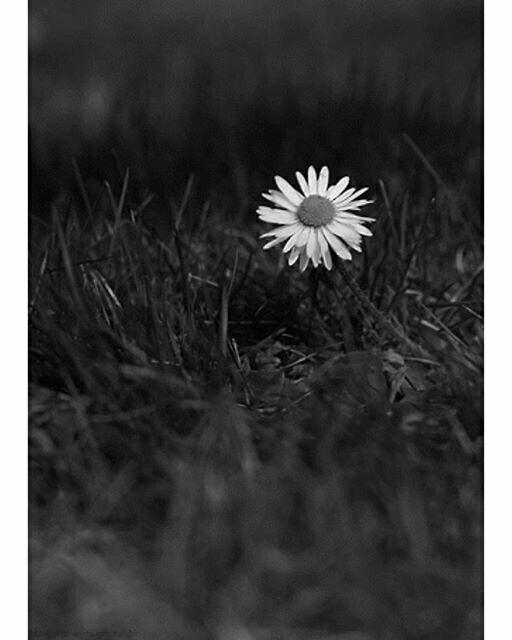 tumblr, flower, black and white, byw, hipster - image ...