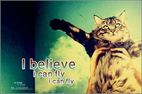 i believe i can fly essay I believe by sienna harlequinn i believe that the sun shines after the rain i believe if you dont get hurt youll never gain i believe in not doing things the easy way i believe that.