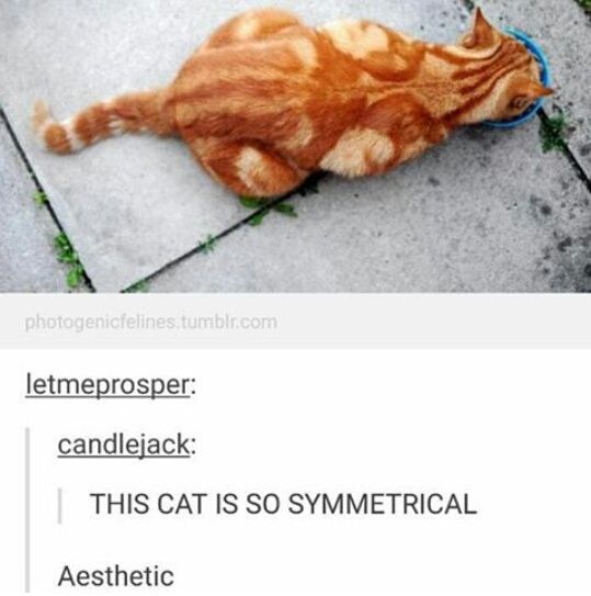 aesthetic, cats, funny, ginger, lmao