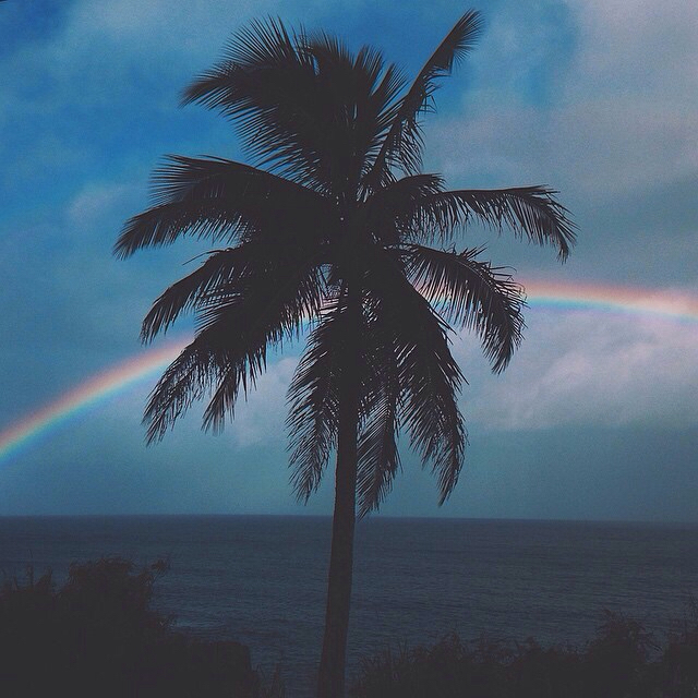 ocean, palm trees, rainbow, sky, summer
