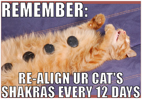 funny cats, meow, science, shakras, cat shakra