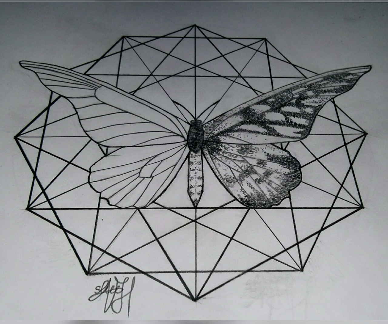 black&white, butterfly, drawing, drawings, geometry