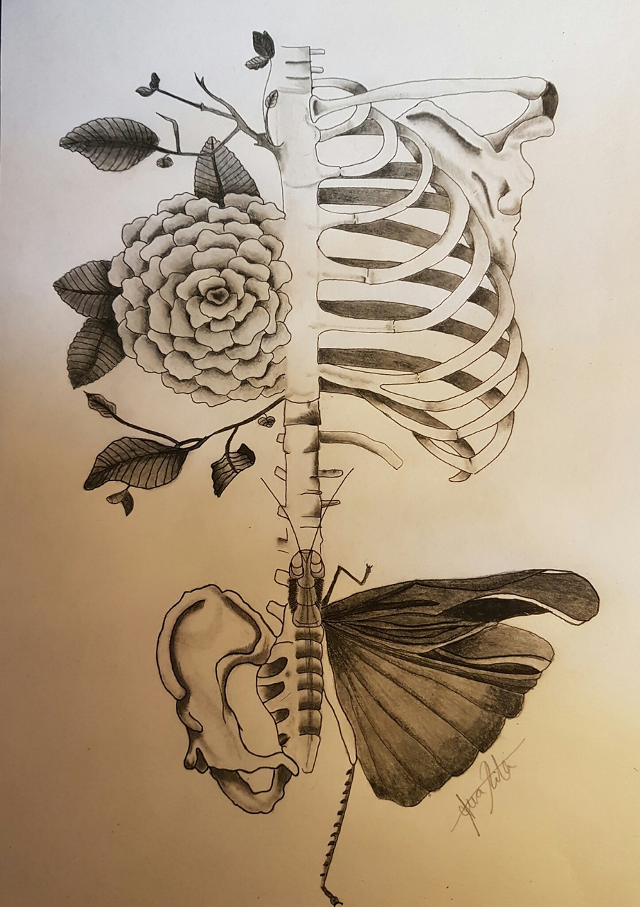 art, biology, butterfly, draw, drawing