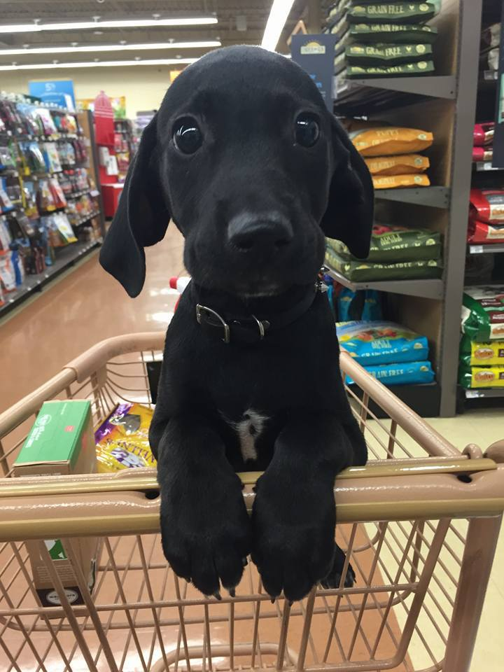 adorable, basket, beautiful, black, cart