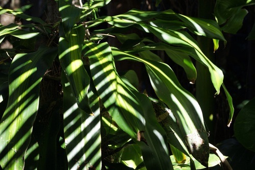 green palm leaves summer - photo #9