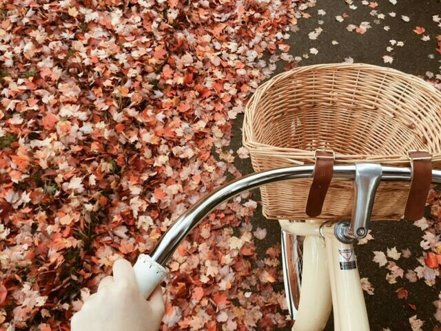 autumn, bicycle, colors, fall, girl