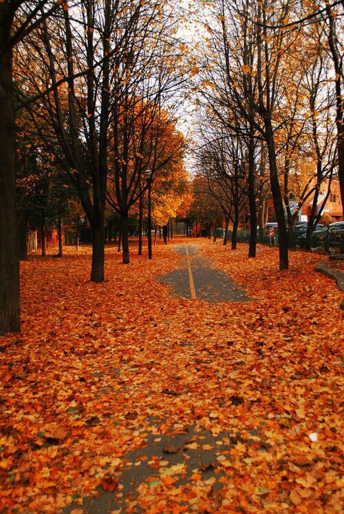 follow me if you love fall image 4849748 by helena888