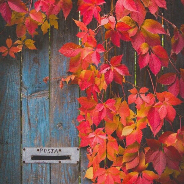 autumn, bright, brown, colors, fall