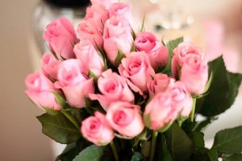 bouquet, flower, pink, pretty, rose