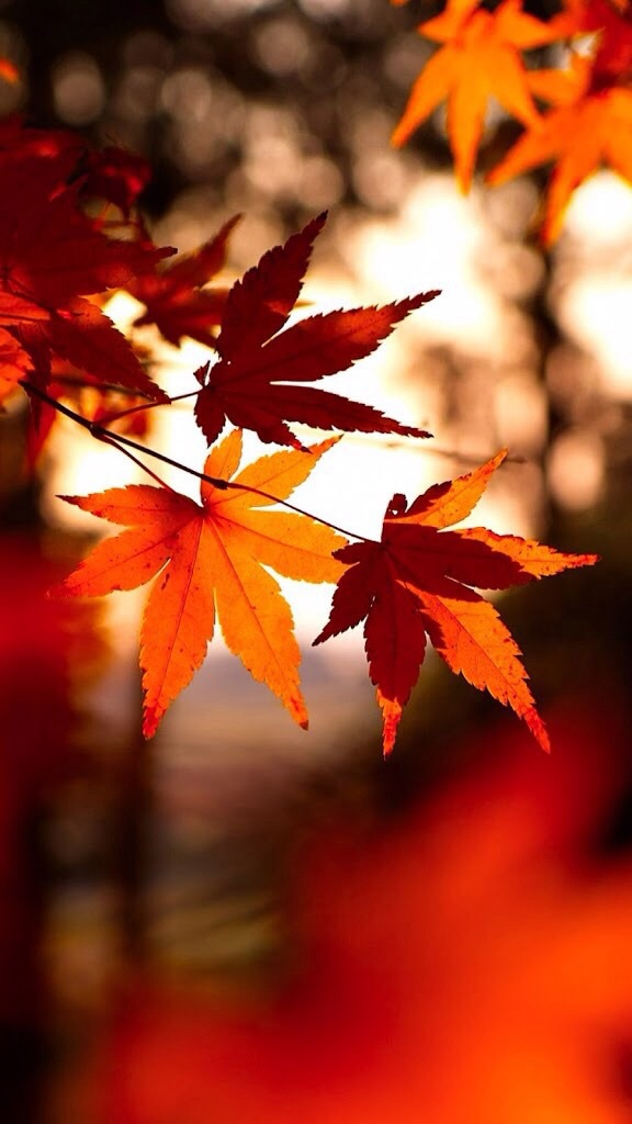 Autumn Fall Leaves Wallpaper Image 4867368 By