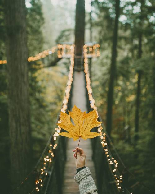 autumn, beautiful, bff, bridge, christmas