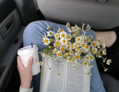 aesthetic, alternative, book, chamomile, coffee