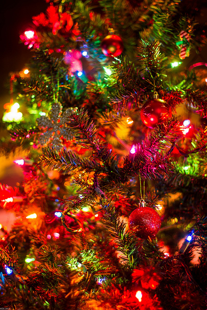 christmas, christmas lights, christmas tree, colorful, colors