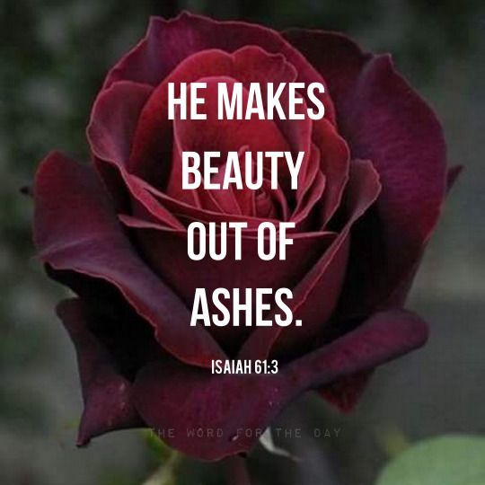 beautiful, bible verse, christian quotes, flowers, god