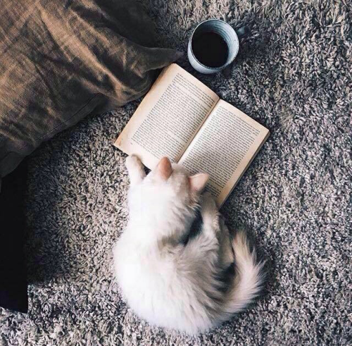 books, cat, christmas, coffee, cold