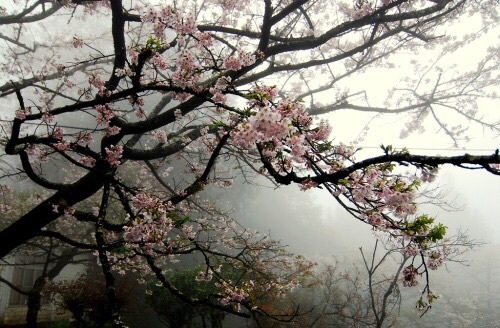 aesthetic, flowers, grunge, japan, lovely