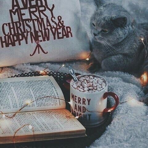 book, cat, christmas, coffee, cold
