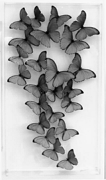 black, butterfly, tumblr, wallpaper, white