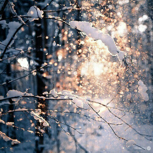 chrismas, christmas, cold, coming, forest