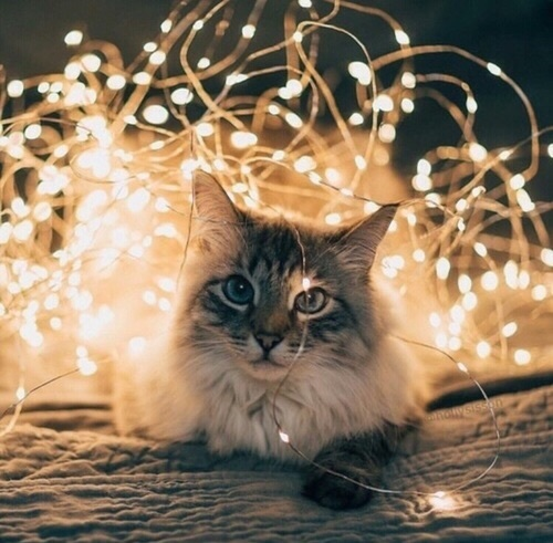cat, christmas, fairy lights, new year, nye