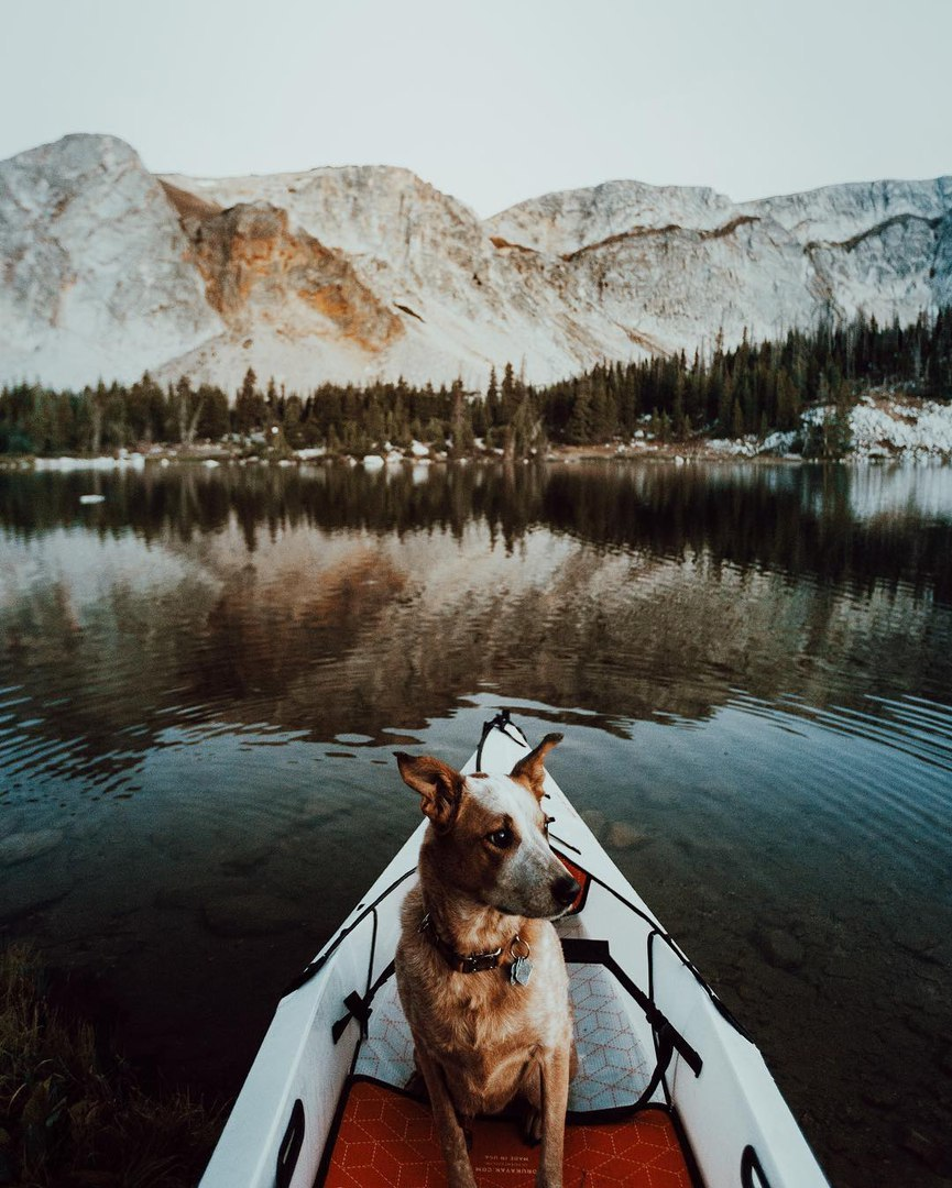 dog, lake, love, mountains, nature