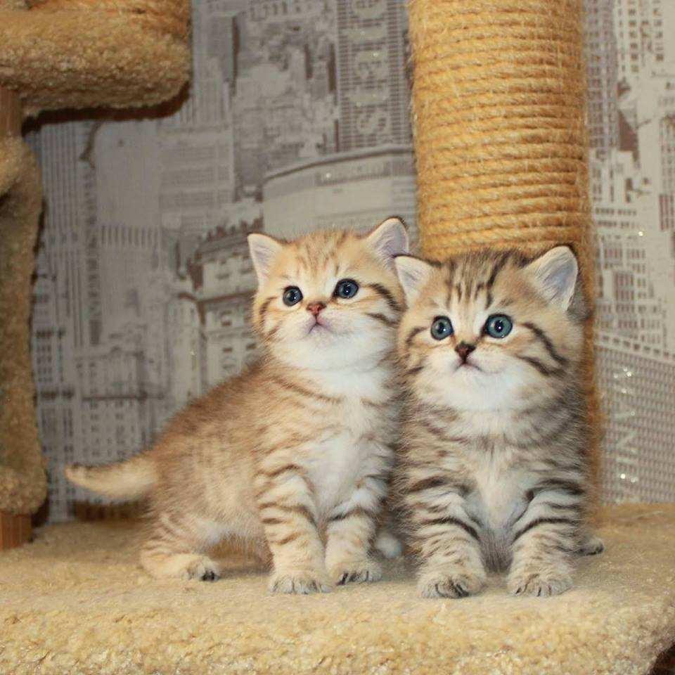 baby animals, cats, cute animals, kitten