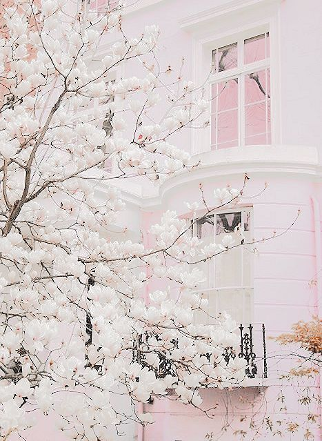 amazing, blossom, flowers, pink, pink house