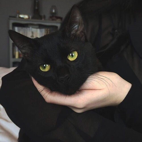 :3, animal, beautiful, black cat, cat