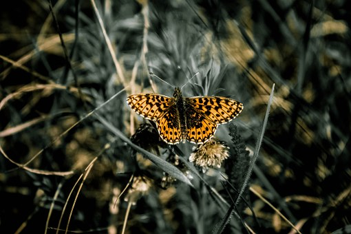butterfly, insects, nature, photography