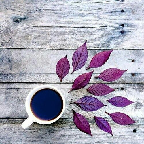 art, autumn, coffee, cup, photo