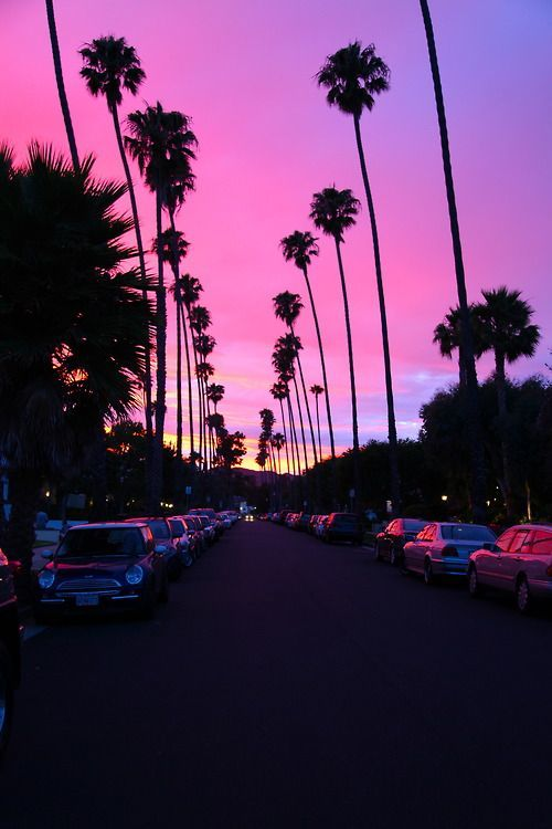 angeles, hollywood, los, palm, purple
