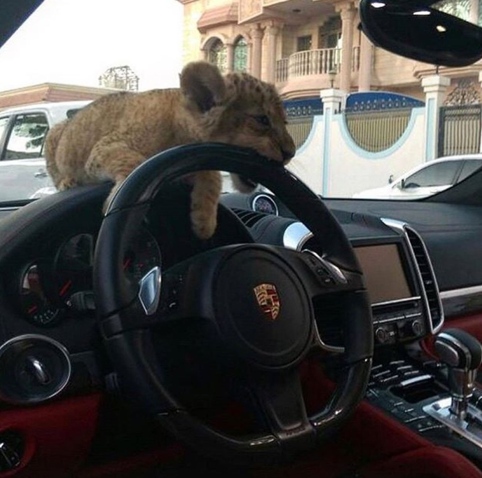 animal, boy, car, cars, elegant