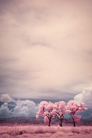 cherry blossom, clouds, flowers, pink, sky