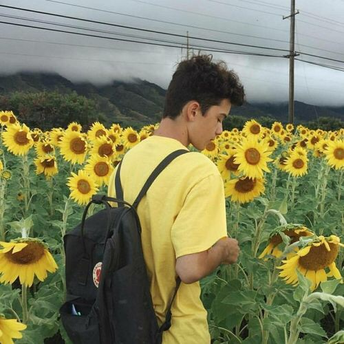 aesthetic, hipster, indie, sunflower, theme