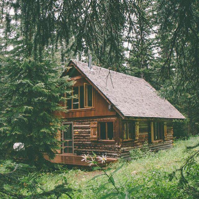 cabin, forest, home, house, log cabin